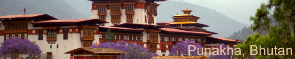 Punakha Blossoms in May